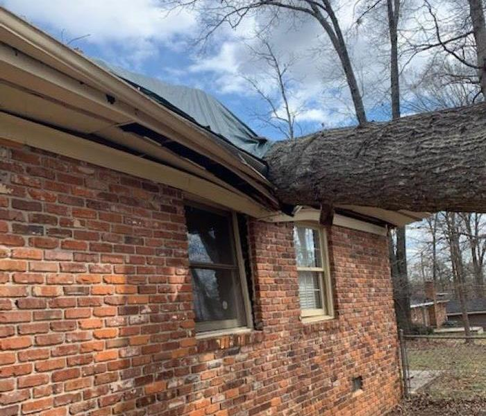 Brick house with tree on roof