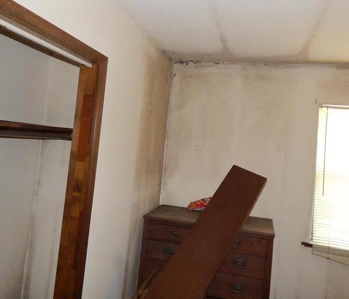 Mold Remediation Does Your Greenwood Home Have A Mold Damage Problem